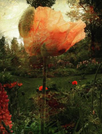 In the Garden of Dark Flowers
